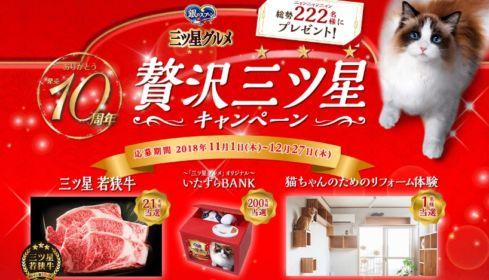 猫ちゃん用リフォーム(100万円相当)が当たる高額懸賞!